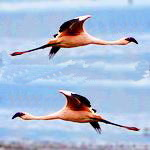 Фотокомпозиция «Фламинго под музыку»